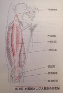大腿部の前面図